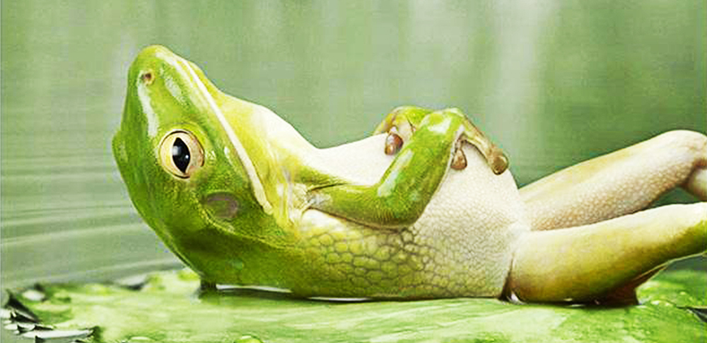 frog-on-back-relax